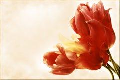 Carte de cru avec un bouquet des tulipes Image libre de droits