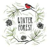 Carte de Forest Design d'hiver avec le pin et le bouvreuil illustration libre de droits