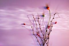 Carte de jour du ` s de mère de jour du ` s de Valentine épousant la tendresse sèche d'amour de ressort d'hiver d'automne de brin Photographie stock