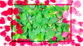 Carte de jour du ` s de Valentine à donner à un beau, doux et coloré Photo stock