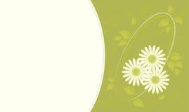 Carte de marguerite Image stock