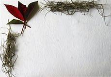 Carte de Noël avec le coin des fleurs naturelles photo stock