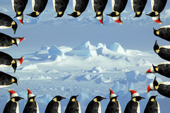 Carte de Noël de pingouin Image stock