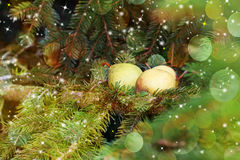 Carte de Noël : poires sur une branche impeccable Image libre de droits