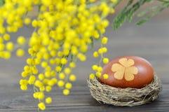 Carte de Pâques heureuse : Oeuf de pâques dans le nid et la mimosa Photos stock