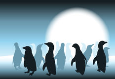 Carte de pingouin Images stock