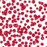 Carte de Valentine avec des pétales d'une rose ENV 10 Photographie stock libre de droits