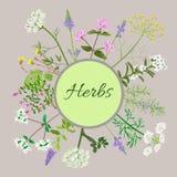 Carte de vecteur avec les fleurs de fines herbes Photo libre de droits