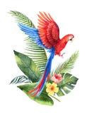 Carte de vecteur d'aquarelle avec le perroquet rouge, les feuilles tropicales et les fleurs d'isolement sur le fond blanc Photographie stock libre de droits