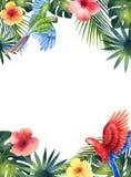 Carte de vecteur d'aquarelle avec le perroquet rouge, les feuilles tropicales et les fleurs d'isolement sur le fond blanc Photos stock