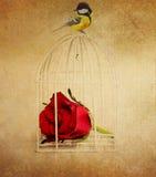 Carte de vintage avec l'oiseau rose et petit Photos libres de droits