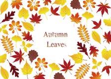 Carte de voeux avec de diverses feuilles d'automne colorées illustration libre de droits
