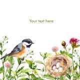Carte de voeux avec l'aquarelle sauvage d'herbes, d'oiseau et de nid Photographie stock libre de droits