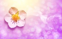 Carte de voeux avec la fleur sur le fond rose Photos libres de droits