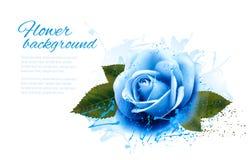 Carte de voeux avec la rose de bleu Image stock