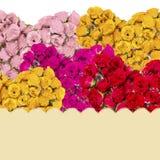 Carte de voeux avec les bouquets colorés des roses Photos libres de droits