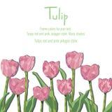 Carte de voeux avec les tulipes roses Style de polygone illustration stock