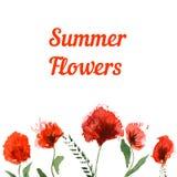Carte de voeux d'aquarelle avec les fleurs rouges d'été Image stock
