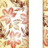 Carte de voeux de feuilles d'automne Image stock