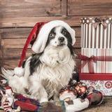 Carte de voeux de Noël de chiens Photos libres de droits