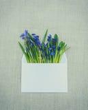 Carte de voeux de Pâques Enveloppe de expédition de bleu de Scilla et blanche Image libre de droits