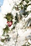 Carte de voeux du ` s de Valentine avec un jouet en verre de coeur sur le branc de pin Photo stock