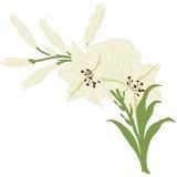 Carte de voeux florale Photos libres de droits