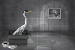Carte de voeux grise de héron Photographie stock libre de droits