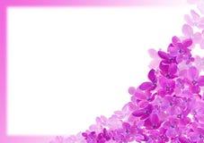 Carte de voeux lilas Images libres de droits