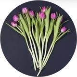 Carte de voeux pour le jour du `s de valentine Carte de voeux pour le jour du `s de valentine Huit tulipes roses sur le fond bleu Photographie stock libre de droits