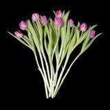 Carte de voeux pour le jour du `s de valentine Carte de voeux pour le jour du `s de valentine Huit tulipes roses sur le fond bleu Photos stock