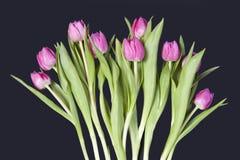 Carte de voeux pour le jour du `s de valentine Carte de voeux pour le jour du `s de valentine Huit tulipes roses sur le fond bleu Photo libre de droits