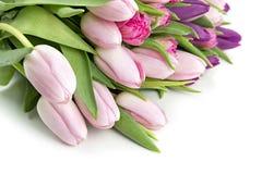 Carte de voeux rose de tulipes Photos stock