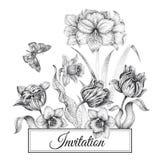Carte dei modelli degli inviti di nozze con i tulipani dei fiori, amaryll illustrazione vettoriale