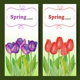 Carte di pasqua con i fiori della molla - tulipani Fotografie Stock Libere da Diritti