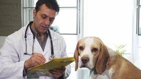 Carte di riempimento del veterinario professionista dopo l'esame ed il cucciolo adorabile del cane da lepre fotografie stock