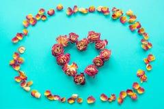 Carte du `s de Valentine Symbole de coeur fait de roses sèches sur un fond bleu Vue supérieure, configuration plate Concept filtr Photographie stock