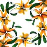 Carte florale Photo stock