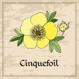 Carte florale avec la fleur jaune de cinquefoil sur le fond grunge Image libre de droits