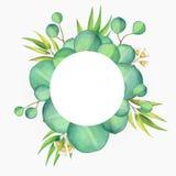 Carte florale de bel eucalyptus avec l'illustration d'aquarelle images stock