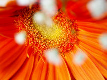 Carte florale orange Images libres de droits