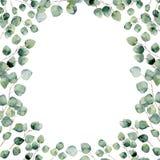 Carte florale verte de cadre d'aquarelle avec les feuilles rondes d'eucalyptus Images stock