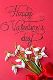 Carte heureuse de jour de valentines avec des perce-neige sur le rouge Image libre de droits