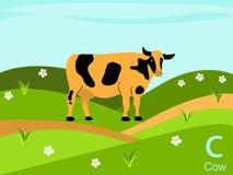 Carte instantanée d'alphabet animal, C pour la vache Image libre de droits