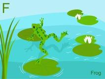 Carte instantanée d'alphabet animal, F pour la grenouille Photographie stock libre de droits