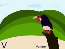 Carte instantanée d'alphabet animal, V pour le vautour Images libres de droits