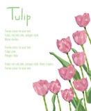 Carte postale avec les tulipes rouges Bouquet polygonal de style des fleurs Images libres de droits