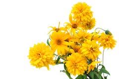 Carte postale d'or d'isolement de fleurs Photo libre de droits