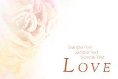Carte postale de cru Cadre de Rose pour le fond avec l'espace pour le texte Image libre de droits