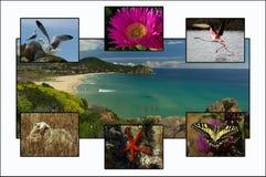 Carte postale de la Sardaigne image libre de droits